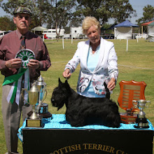 Photo: Best In Show and Best Open, JR.CZ.BULG.BALK.MON.MOLD.AUST.CH.CENTO EURI-ESCOT (CZ.REP.) owned by Christine Moore & Roy Mallinder