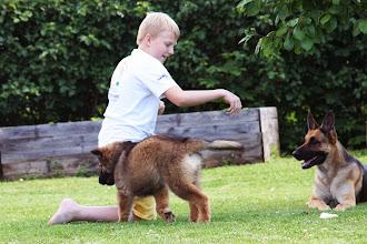 Foto: Man ska aldrig lita på en valp!! ;)