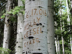 Photo: Aspen carving at the Fly Canyon trailhead from exactly one year earlier