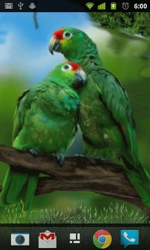Parrot Love Live Wallpaper