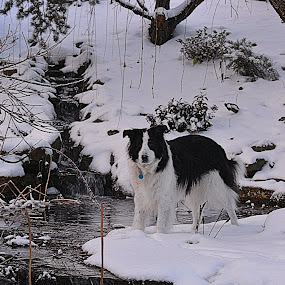 My Best Friend by William Stewart - Animals Other ( water, winter, brook, pets, snow, dog )
