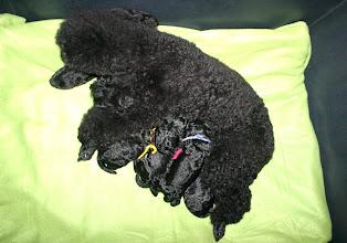 Photo: Mama Nike mit ihren schwarzen Welpen!