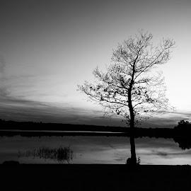 Tree by Michal Chojnacki - Black & White Landscapes