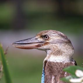 by Cheryl Larsen - Animals Birds