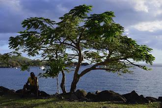 Photo: Le service de bus, qui part de Pointe à Pitre et dessert toute la côte de Basse-Terre, est assez long (1 toutes les heures). Alors on se distrait en téléphonant aux copains à l'ombre d'un flamboyant.