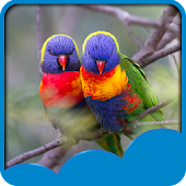 Love Birds Live Wallpapers