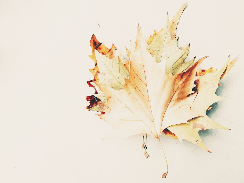 La forma dell'autunno di Eleonork