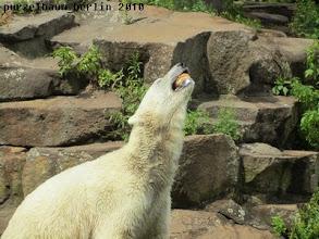Photo: Das Broetchen hat Knut sicher erwischt :-)