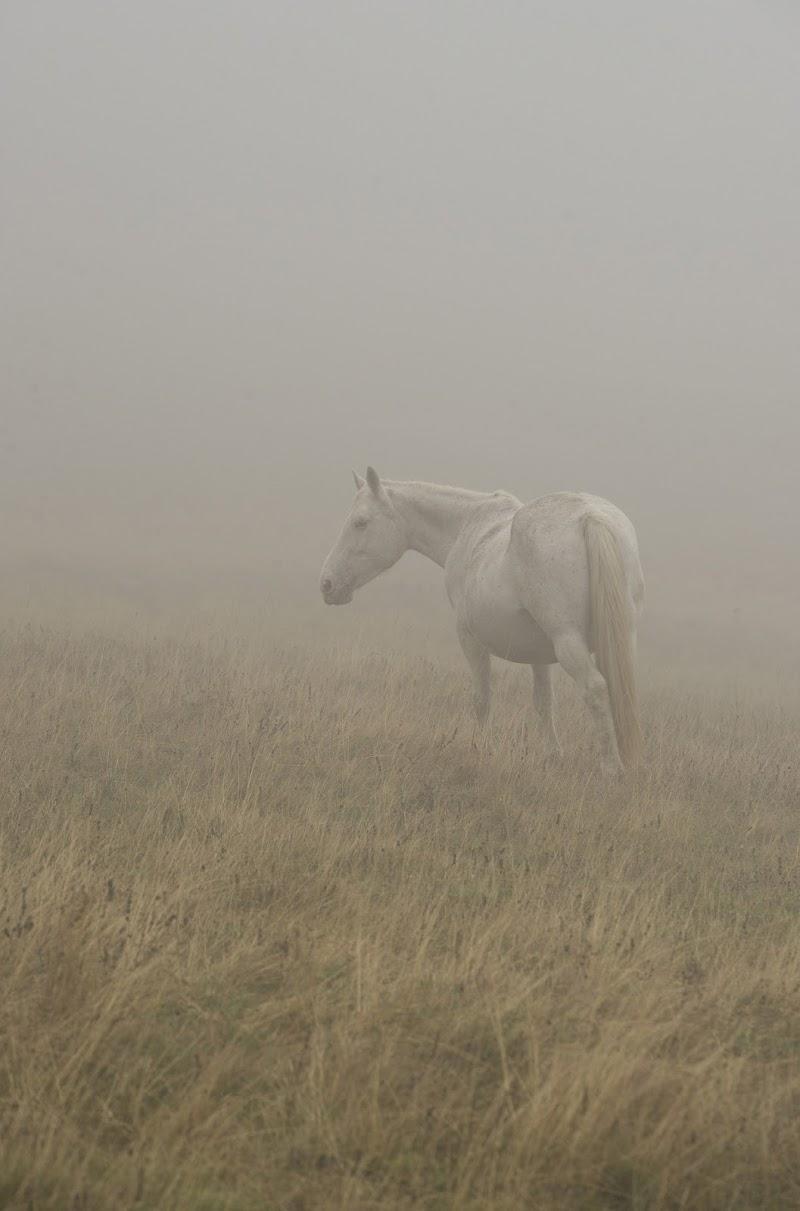 Pascoli Nella Nebbia di Andrea Di Florio