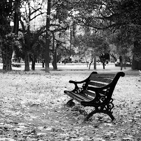 Left Alone by Sudheer Hegde - City,  Street & Park  City Parks ( tree, nature, park, bench, infrared, d800, white, 50mm, bnw, nikon, black, city )