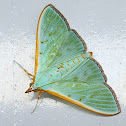 Kadam Leaf Roller