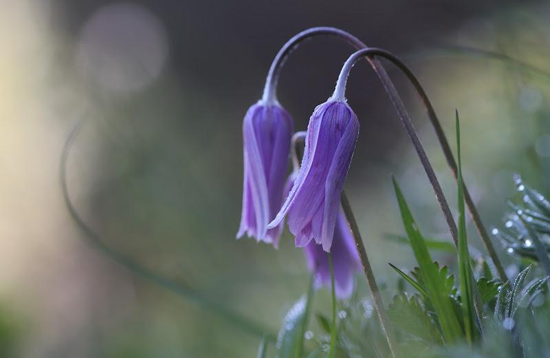 Beautiful flowers di Fe140