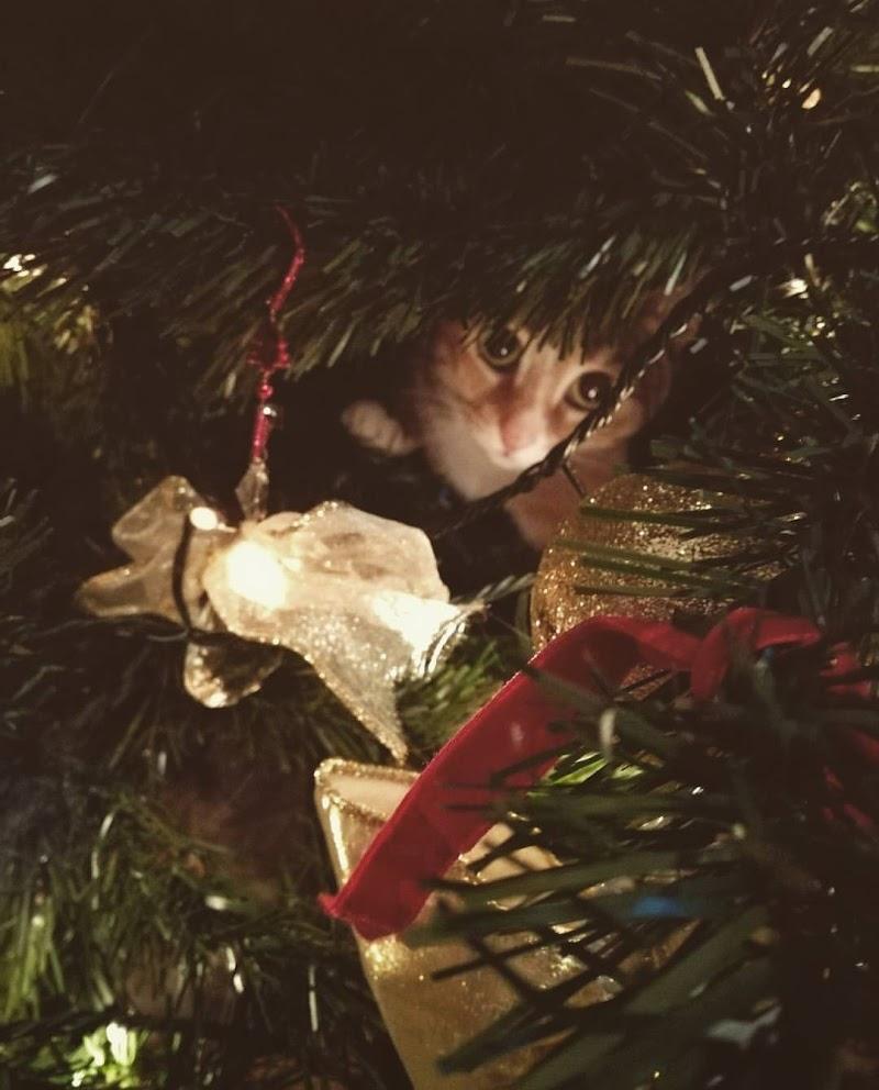 Gatto Natale di alessandra_frankini