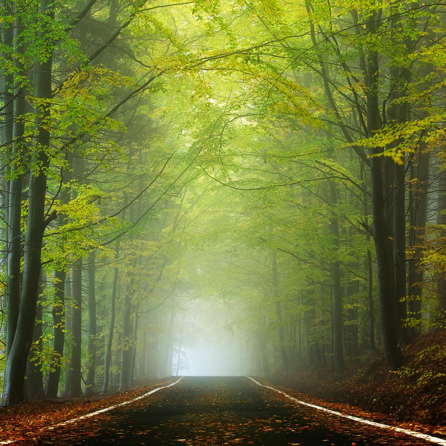Forest Temple by Martin Rak - Landscapes Forests ( nature, fog, autumn, colors, czech republic, trees, forest, road, landscape, beech, light, mist )