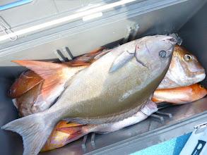 Photo: デカオナガに真鯛!