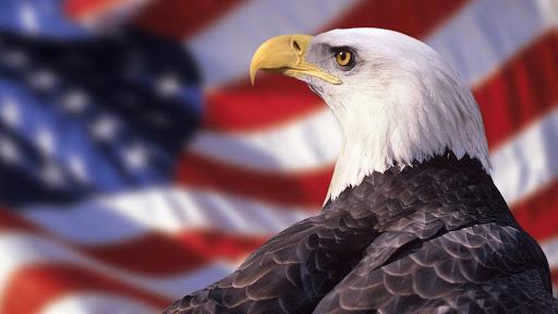 American Eagle. Live wallpaper