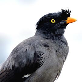 Thoughtfhl brdie by SANGEETA MENA  - Animals Birds (  )