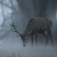 Incontri nella nebbia di