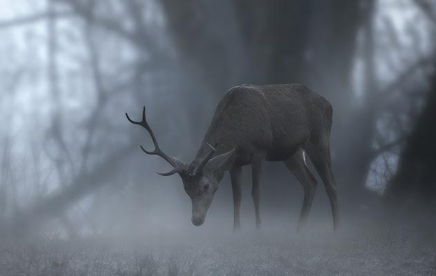 Incontri nella nebbia di marcovp