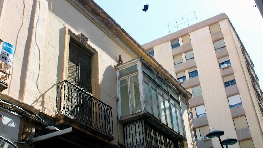 Una montaña de excrementos de palomas se alza sobre un histórico balcón de la céntrica calle de Castelar.