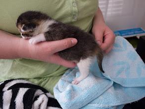 Photo: Mia's Kittens 22