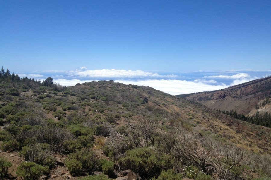 El_Teide_Vegetation