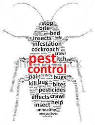 Image result for pest control diy
