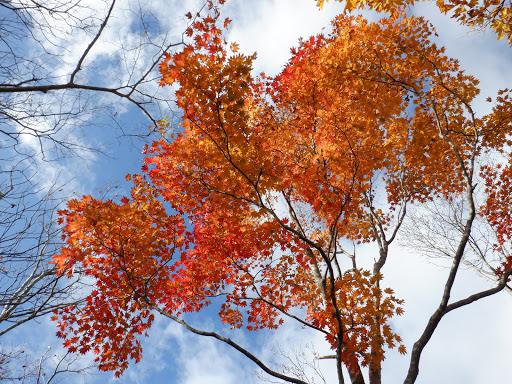 山頂の紅葉が見頃