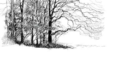 Photo: trees1-2