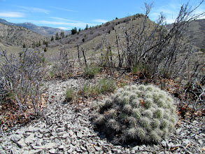 Photo: Cactus on the ridge west of Ford Creek