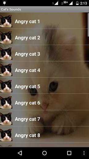 Cat's Sounds