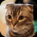 Pretty Cute Cat HD Wallpaper icon