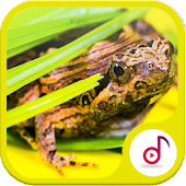 frog Ringtone Collections Free