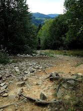 Photo: Na tym szlaku są chyba wszystkie kamienie ze Śląskiego, a korzenie na końcu jeszcze bardziej wypłukane ;)