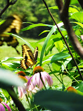 Photo: Distant butterfly on a flower at Cox Arboretum in Dayton, Ohio.