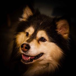 by Terje N. Johansen - Animals - Dogs Portraits
