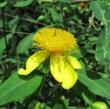 Photo: Unknown Flower