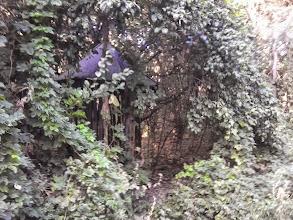Photo: Abandoned well along a jungle way, Ostoros, Hungary
