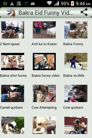 Bakra Eid Funny Videos
