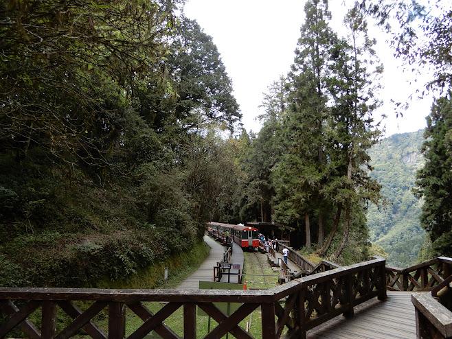 森の中にたたずむ神木駅