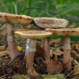 Fungi by Natasja and Martijn - Nature Up Close Mushrooms & Fungi ( macro, fungi, autumn, summer, mushrooms )