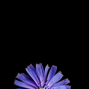 Towards the light by Annelie Hallberg - Nature Up Close Flowers - 2011-2013 ( nature, purple, symbol, flower, close, nikond600 )