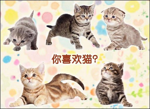 猫卡播放 玩纸牌