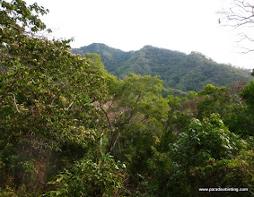 Photo: DAY 3: the jungles above Tecuitata, south of San Blas