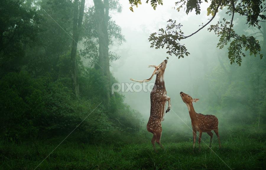 breakfast by Budi Cc-line - Digital Art Things ( fog, wildlife, deer )