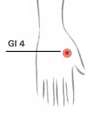 GI4 (Gros intestin 4)