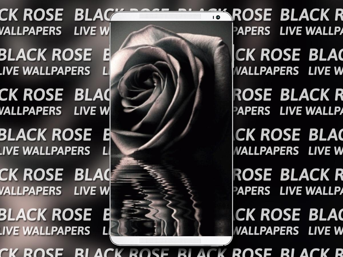 Black rose live wallpaper android apps on google play for Do black roses really exist