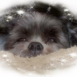 Sweety Leo by Carolyn Kernan - Digital Art Animals (  )