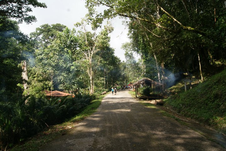 jungle street di Ale Brigante