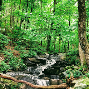 Where the Water Flows by Stacey Witherwax - Landscapes Forests ( forest, stream, nature, trees,  )
